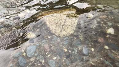 Stones and Rocks Under Clear Water