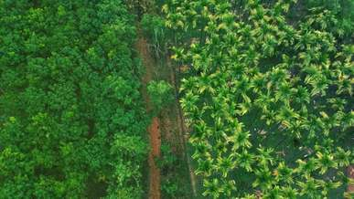 Plantation Of Different Trees