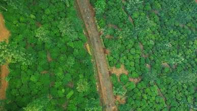 Aerial View Of Plants And Trees