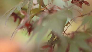 Zoom Out Video Of Autumn Leaves