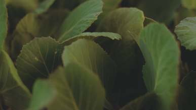 Leaves Eaten By Insects