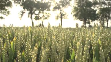 Video Of Cropland