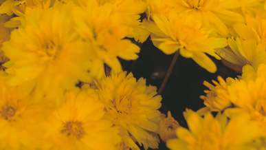 Close View Of Yellow Flowers