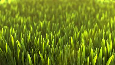 Close View Of Green Grass