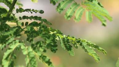 Tree With Small Green Leaves