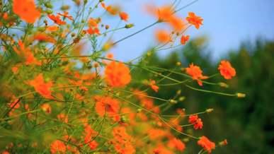 Variety of Flowers In Bloom