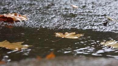 Wet Leaves on Street, Rainy