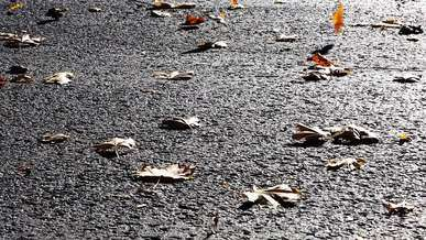 Leaves on Asphalt, Windy
