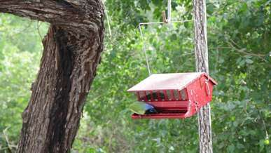 Bird eating on Birdhouse