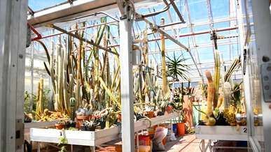Greenhouse with Cacti