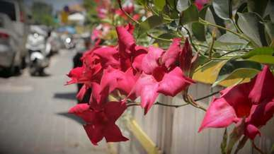 Pink / Red Flowers