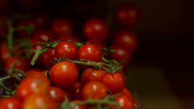 Picking Up Cherry Tomatoes