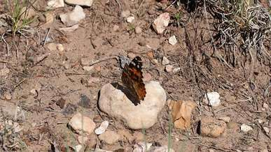 Butterfly Flying Away From A Rock