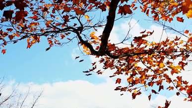 Leafs Tree Wind Autumn