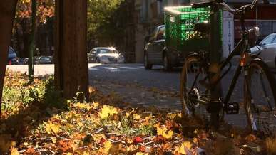 Bicycle, Cars, City, Fall