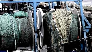 Bird and Fishing Net