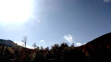 Sky, Sun, Forest