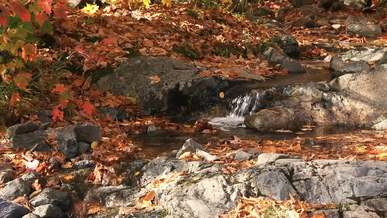 Small Waterfall In The Autumn