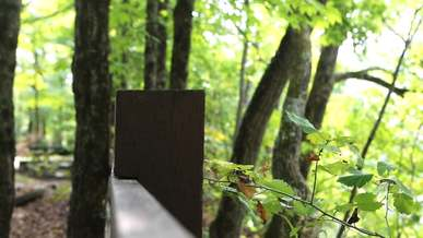 Trees Near Fence
