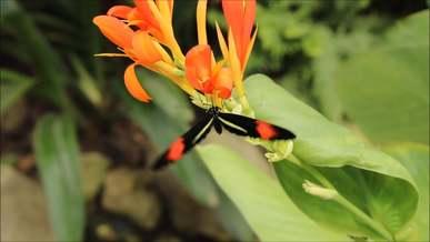 Butterfly On A Beautiful Flower