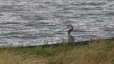 Heron At The Lakeside