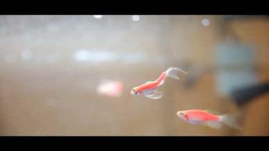 Fishes In A Aquarium